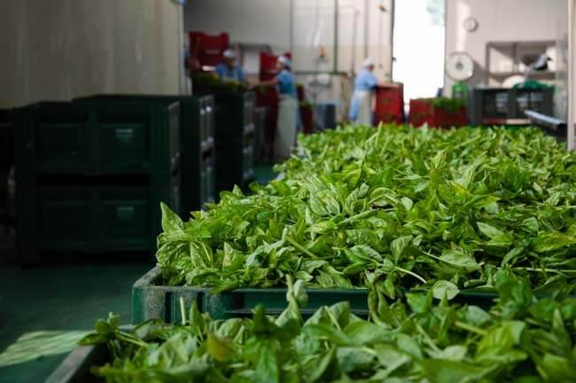 Montanini conserve alimentari food quality